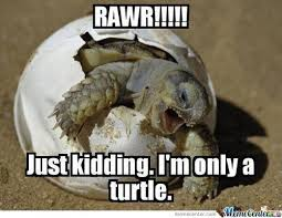 Funny Turtle Memes - turtles are slow but sure know how to be funny 27 memes that prove