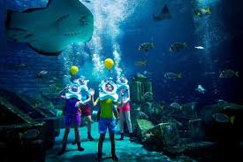 sea trek aquarium diving sea trek helmet diving u2014 join us on a