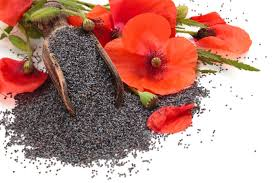 Black Purple Pink Green Peace by Poppy Flower Meaning Flower Meaning