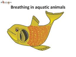 science breathing in animals insects english youtube