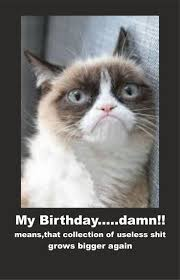 Unamused Cat Meme - happy birthday funny gif cat happy birthday ideas