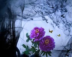 flower beautiful flowers butterfly purple smokey hd flower field