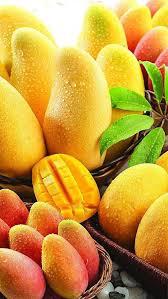 best 25 mango fruit ideas on pinterest recipes with mango fruit