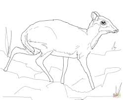 lesser mouse deer coloring page free printable coloring pages deer