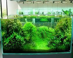 aquarium installation type freshwater african cichlids aquarium