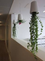 Office Plants by Hanging Office Plants And Flowers Delivered Flowers By Flourish