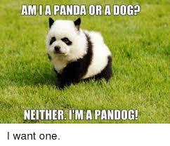 Panda Meme Mascara - 25 best memes about panda panda memes