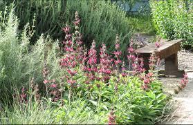 native plant nursery landscape design u2013 back to natives restoration