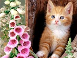 wide hdq kittens and flowers wallpapers kittens and flowers