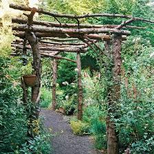 Grape Vine Pergola by Best 10 Grape Arbor Ideas On Pinterest Wisteria Arbor Wisteria