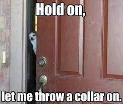 Door Meme - i has a hotdog door funny dog pictures dog memes puppy