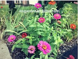 8 plants for triangle garden gardens flowers it u0027s gardening