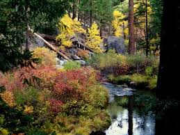 7 spots fall color california kcet