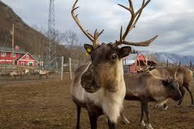 halloween weekend 2015 u0026 the palmer reindeer farm u2013 bones bits u0026 buns