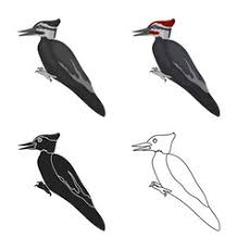 woodpecker vector images 290