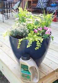 Patio Plants For Sun How To Choose Plants For Patio Potsa Southern Mother