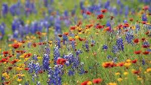 wildflower seed packets free plantable wildflower seed paper free packet of wildflower