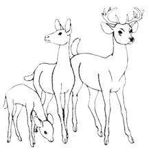 coloring pages draw deer arterey