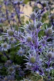 free images nature outdoor meadow flower wild green herb