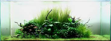 Aquascape Inspiration Amazing Nature Aquascape Sebastian Costin Flickr