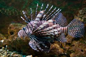 types of aquariums seatech aquariums