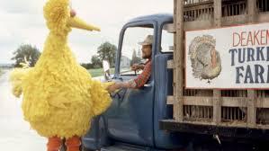 sesame street thanksgiving big bird follow that bird u0027 turns 30 director on jim henson u0027s feedback
