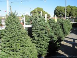 city offers free christmas tree recycling sherman oaks ca patch