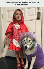 Best Halloween Costume 16 Best Dog Halloween Costumes Images On Pinterest Costume Ideas