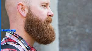 how to measure your beard length designing a neck line for your full beard all about beards