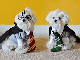 Cute Small Dog Halloween Costumes 56 Cute Pets Disney Marvel U0026 Images