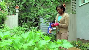kill pests on contact with vegetable u0026 garden insect spray