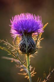 plants native to scotland 1776 best gardening pretty flowers images on pinterest flowers