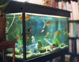 fish tank freshwater aquarium decoration ideas l i h decor fish