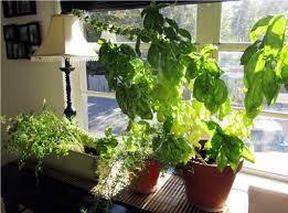 indoor herb garden ideas i absolutely love indoor herb garden