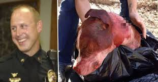 american pitbull terrier jaw instead of being sorry this policeman was happy to shoot an