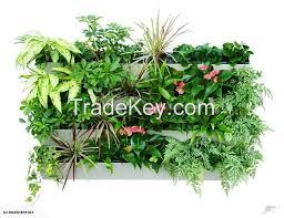 Watering Vertical Gardens - outdoor indoor self watering vertical garden by space way systems uae