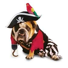 Dogs Halloween Costumes Pirate Dog Halloween Costume Dogs Tom Dwyer Automotivetom
