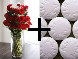 How To Make Roses Live Longer In A Vase How To Make Flowers Last Longer 8 Pro Tricks Aspirin Cut