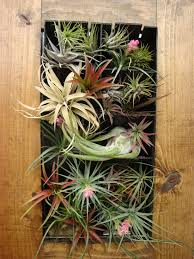 Inspirations Home Decor Raleigh Amusing Air Plant Wall Display 46 For Decor Inspiration With Air
