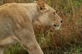 sle resume journalist position in kzn wildlife ezemvelo accommodation copypasteimage 532 jpg