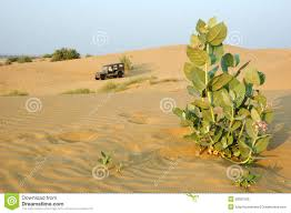 thar desert animals jeep safari in the thar desert rajasthan india royalty free stock