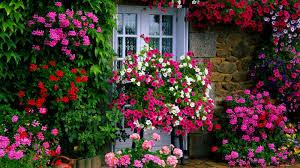Flowers For Backyard by 10 Best Low Maintenance Flowers For Effortless Garden