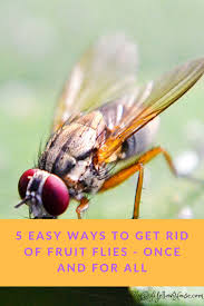 5 easy ways to get rid of fruit flies my big yellow house