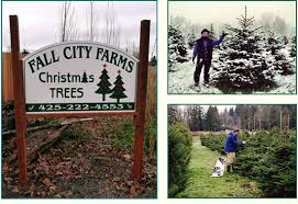 Washington Christmas Tree Farms - cut your own christmas tree farm in carnation season starts the