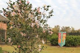 All Year Flowering Shrubs - flowering shrubs for a south louisiana winter greenseasons