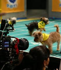 affenpinscher animal planet barking rights are up for grabs when animal planet u0027s puppy bowl