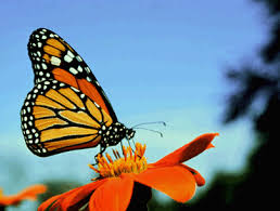 butterfly dreams the monarch confessions of a clairsentient