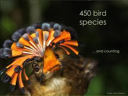 amazon rainforest native plants 118 best amazon rainforest images on pinterest beautiful birds