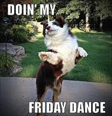 australian shepherd meme dogs friday dance what breed is it