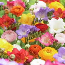 100 flower and bulb catalogs easy to grow bulbs buy flower